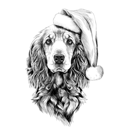 dog breed Cocker Spaniel face in a Santa hat, sketch vector graphics black and white drawing Illustration
