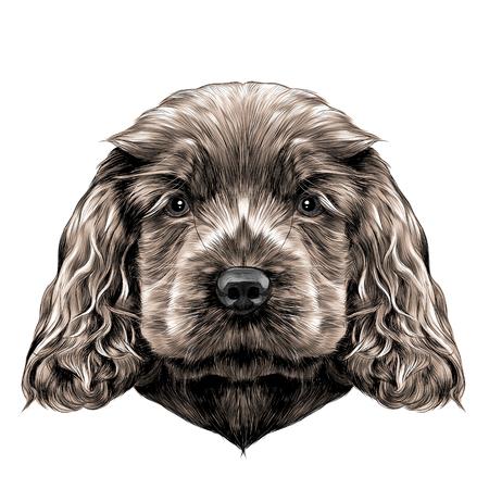hond ras Cocker Spaniel puppy, schets vector graphics kleur foto