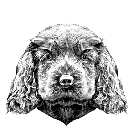 dog breed Cocker Spaniel puppy, sketch vector graphics black and white drawing Illustration