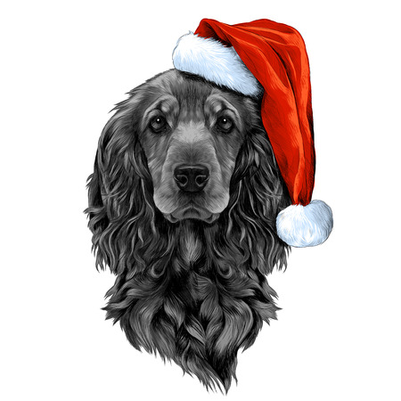 dog breed Cocker Spaniel face in a Santa hat, sketch vector graphics color picture