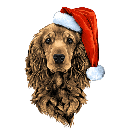 犬サンタの帽子で顔をコッカー ・ スパニエルを繁殖、ベクトル グラフィック カラー写真をスケッチ