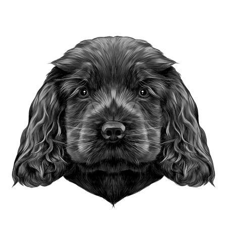 犬コッカー ・ スパニエルの子犬を繁殖、ベクトル グラフィック カラー写真をスケッチ