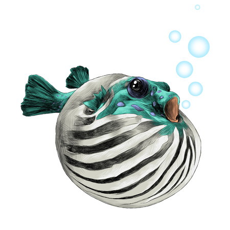 fish arothron bubble inflated sketch vector graphics color picture Stock Vector - 80790097