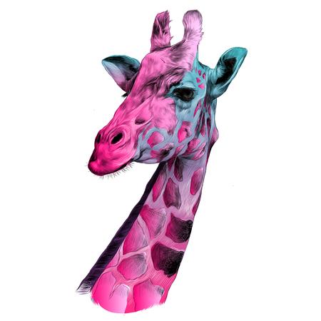 キリンの頭スケッチ パターン ベクトルのグラフィックの色ピンクとブルー
