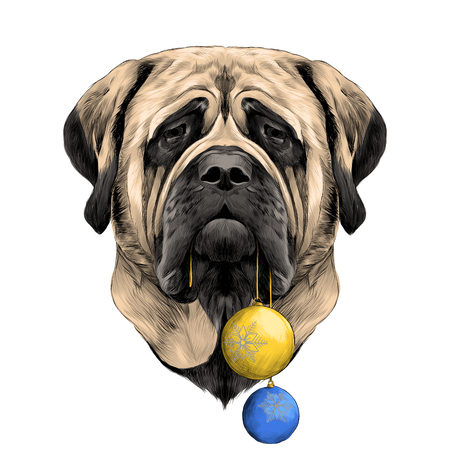 head dog breed Mastiff with new years balls in his mouth, sketch vector graphics color picture