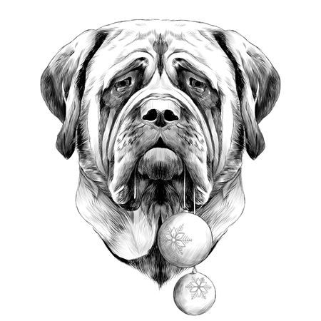 head dog breed Mastiff with new years balls in his mouth, sketch vector graphics black and white drawing