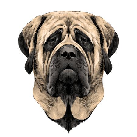 hoofd hondenras Mastiff, schets vectorafbeeldingen kleurenfoto Stock Illustratie