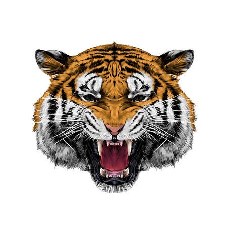 witte tijger hoofd grommende schets vectorafbeeldingen kleurenfoto