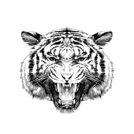 tiger head growling sketch vector graphics black and white drawing