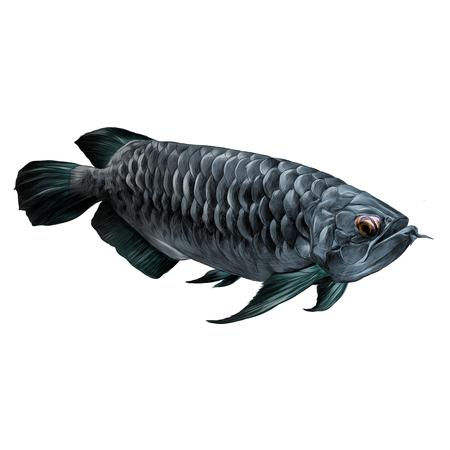 アルアナ魚泳ぐ横スケッチ ベクトル グラフィック カラー写真  イラスト・ベクター素材