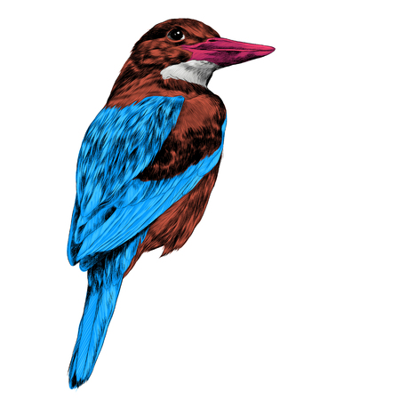 bird Alcyone sketch vector graphics color picture Illustration