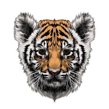 colorized: tiger cub head sketch vector graphics color picture Illustration