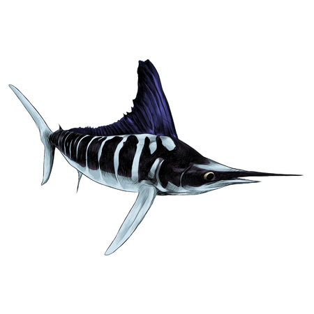 fish blue Marlin, swordfish, pointed toe sailing sketch vector graphics color picture Çizim