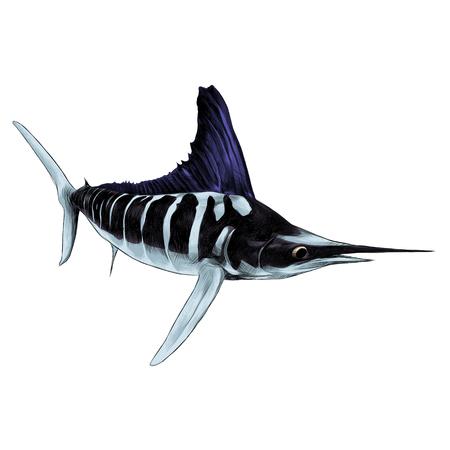 pez azul Marlin, pez espada, dedo del pie señalado navegación gráficos vectoriales color imagen Ilustración de vector