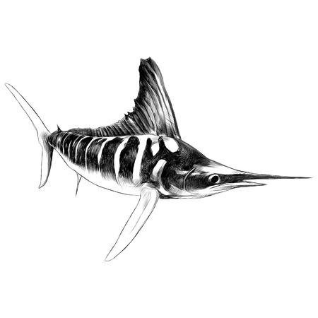 青魚のマカジキ、メカジキ、先のとがったつま先スケッチ ベクトル グラフィックスの黒と白の図面をセーリング