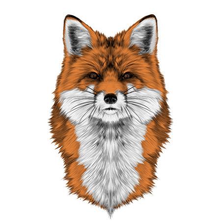 Tête de renard devant directement croquis graphiques vectoriels image couleur