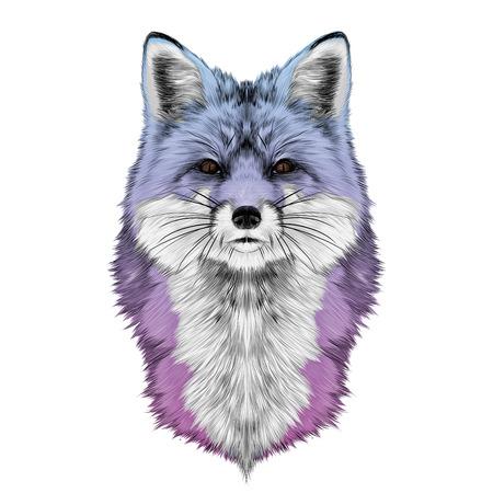 여우 머리 앞에서 직접 찾고 스케치 벡터 그래픽 색 그라데이션 보라색, 분홍색, 파란색
