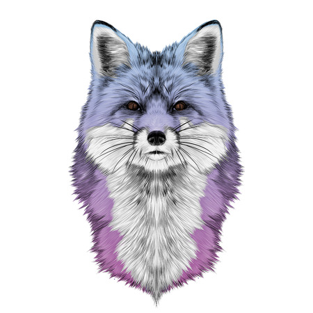 Fox head front looking directly sketch vector graphics colored drawing gradient purple, pink, blue