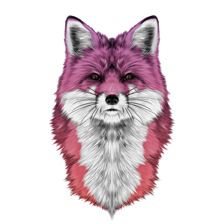 Fox head front looking directly sketch vector graphics colored drawing gradient pink red Illustration