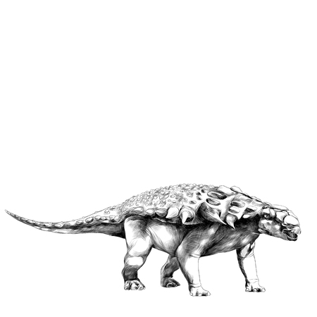 dinosaur in full growth stegosaurus Armadillo with spikes on the back, sketch vector graphics black and white drawing Illustration