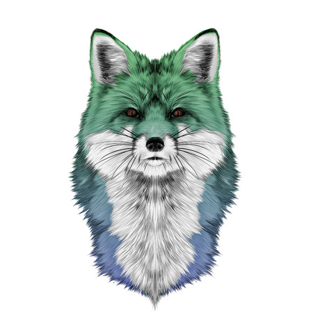 Fox head front looking directly sketch vector graphics color illustration of gradient blue, green, turquoise Illustration