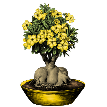 flower tree adenium desert rose in a pot sketch vector graphics color picture Illustration
