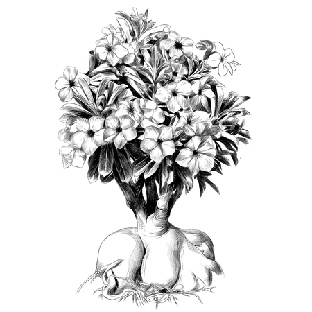 flower tree adenium desert rose sketch vector graphics black and white drawing Illustration