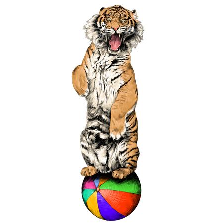 Der Tiger steht auf Hinterbeinen mit offenem Mund im Zirkus auf einem Heißluftballon Skizze Vektorgrafik Farbfoto Standard-Bild - 81227932