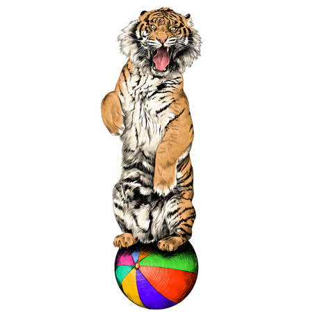 the tiger stands on hind legs with open mouth at the circus on a hot air balloon sketch vector graphics color picture