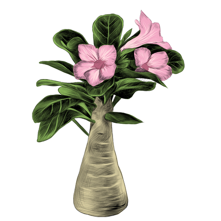 flower tree adenium desert rose sketch vector graphics color picture
