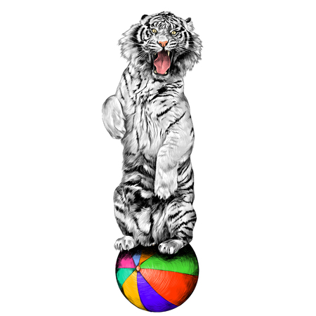 white tiger standing on hind legs with open mouth at the circus on a hot air balloon sketch vector graphics color picture