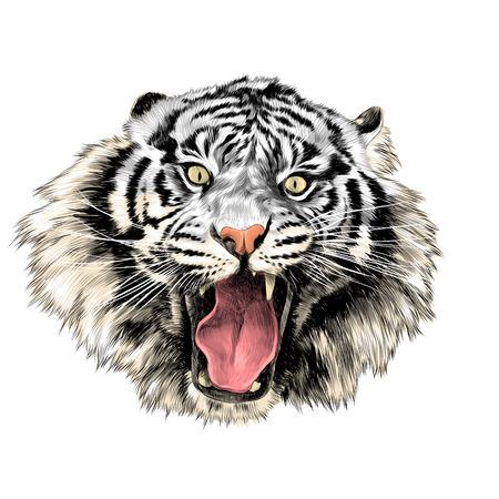 Weiße Tiger Gesicht mit offenem Mund Skizze Vektorgrafiken Farbbild Standard-Bild - 81227934