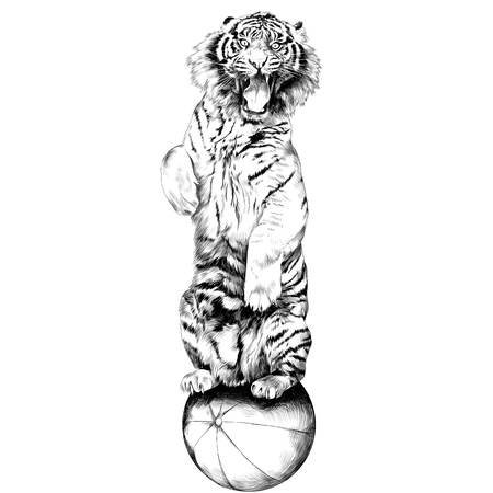 the tiger stands on hind legs with open mouth at the circus on a hot air balloon sketch vector graphics black and white drawing Ilustração