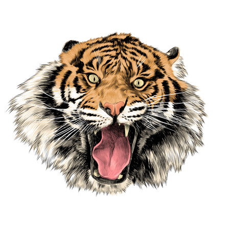 tiger face with open mouth sketch vector graphics color picture Illustration