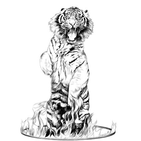 フルレングスのトラは火スケッチ ベクトル グラフィックスの黒と白の図面のサーカス リングの後ろ足  イラスト・ベクター素材