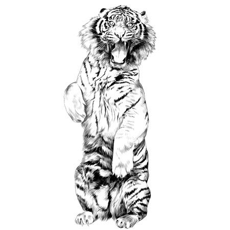 開口スケッチ ベクトル グラフィックスの黒と白の図面と後ろ足で立っている虎  イラスト・ベクター素材