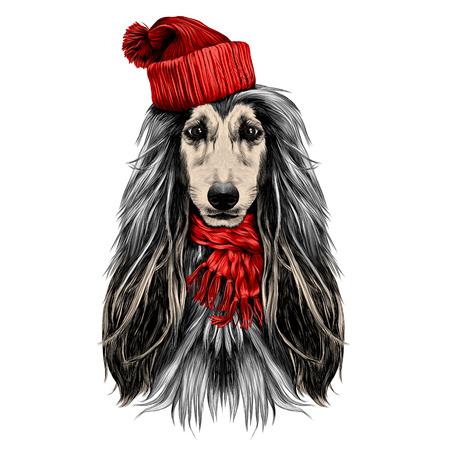 산타 모자와 스카프 스케치 벡터 그래픽 컬러 그림에서 아프간 하 운 드의 강아지 머리 전체 얼굴 품종