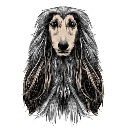 개 머리 전체 얼굴 품종 아프간 하운드 스케치 벡터 그래픽 컬러 사진