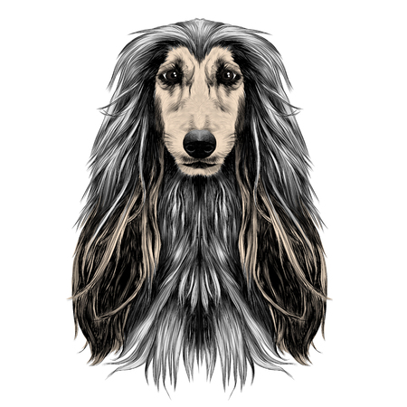 dog head full-face breed Afghan hound sketch vector graphics color picture Illustration