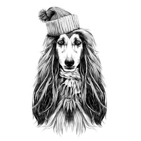 dog head full-face breed of Afghan hound in Santa hat and scarf sketch vector graphics black and white drawing Illustration