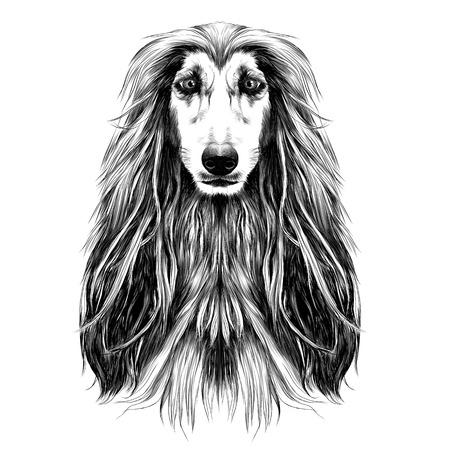 개 머리 전체 얼굴 품종 아프간 하운드 스케치 벡터 그래픽 흑백 드로잉 일러스트