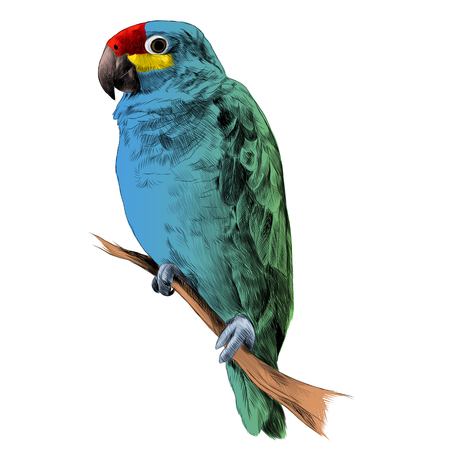 parrot Amazon green, and blue colors sitting on a tree branch sketch vector graphics color picture