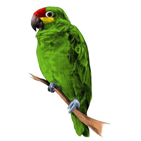 parrot Amazon green sitting on a tree branch sketch vector graphics color picture Ilustração