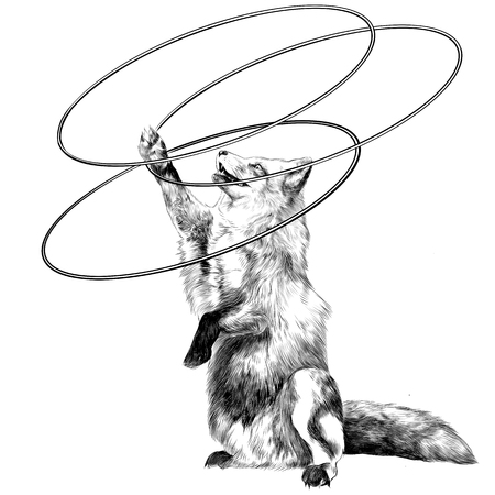 twists: a Fox on its hind legs at the circus twists hoops sketch vector graphics black and white drawing Illustration