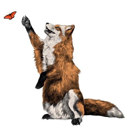 Fox catching a butterfly, sketch vector graphics color picture