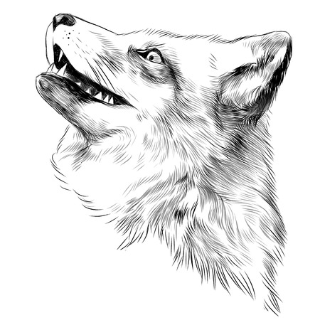 Fox face sketch vector graphics black and white drawing