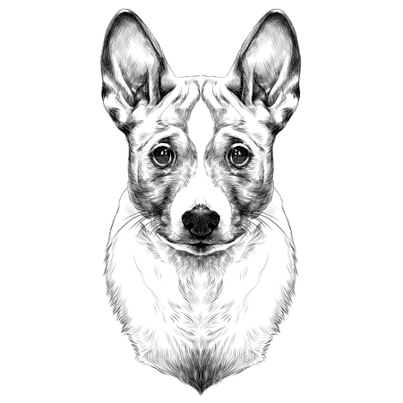 Dog breed Basenji head sketch vector graphics black and white drawing