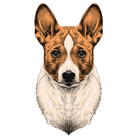Dog breed Basenji head sketch vector graphics color picture