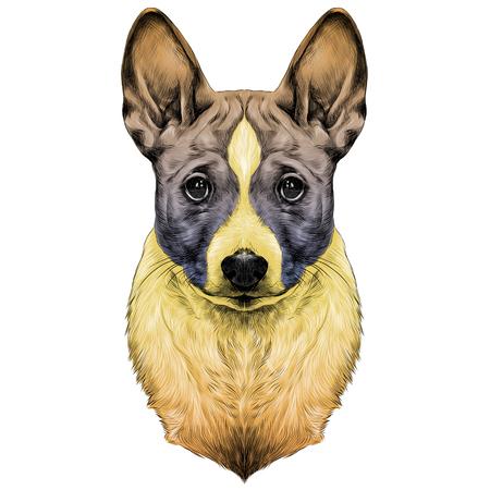 De hondenras Basenji hoofdschets vector grafische tekening gekleurde gradiënt