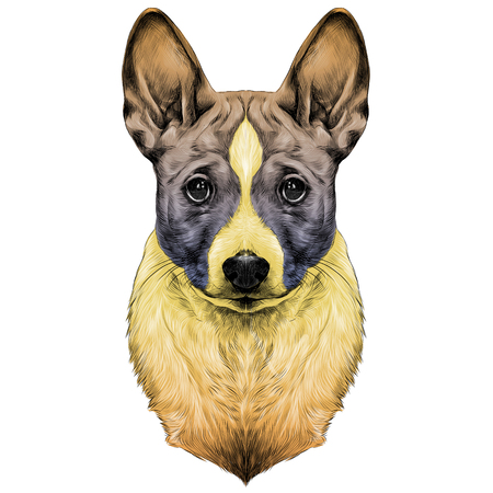 Die Hunderasse Basenji Kopf Skizze Vektorgrafiken farbige Zeichnung bunten Farbverlauf Standard-Bild - 82265971